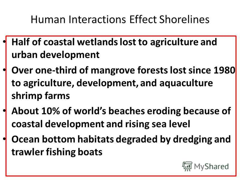 Human Interactions Effect Shorelines Half of coastal wetlands lost to agriculture and urban development Half of coastal wetlands lost to agriculture and urban development Over one-third of mangrove forests lost since 1980 to agriculture, development,