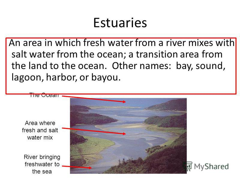Estuaries An area in which fresh water from a river mixes with salt water from the ocean; a transition area from the land to the ocean. Other names: bay, sound, lagoon, harbor, or bayou. River bringing freshwater to the sea The Ocean Area where fresh