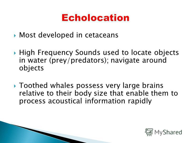 Most developed in cetaceans High Frequency Sounds used to locate objects in water (prey/predators); navigate around objects Toothed whales possess very large brains relative to their body size that enable them to process acoustical information rapidl