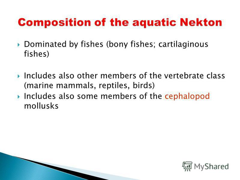 Dominated by fishes (bony fishes; cartilaginous fishes) Includes also other members of the vertebrate class (marine mammals, reptiles, birds) Includes also some members of the cephalopod mollusks