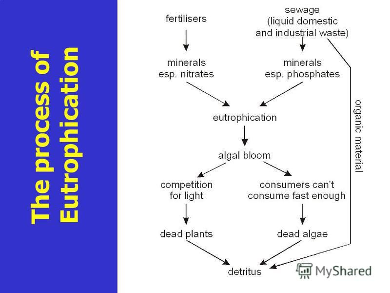 The process of Eutrophication