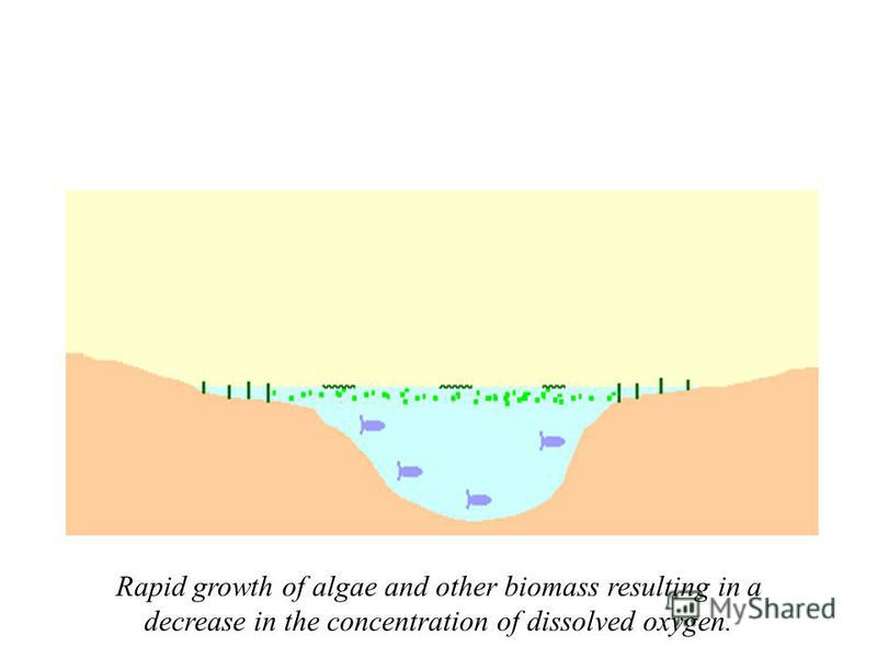 Rapid growth of algae and other biomass resulting in a decrease in the concentration of dissolved oxygen.