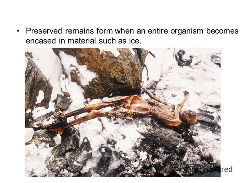 Preserved remains form when an entire organism becomes encased in material such as ice.