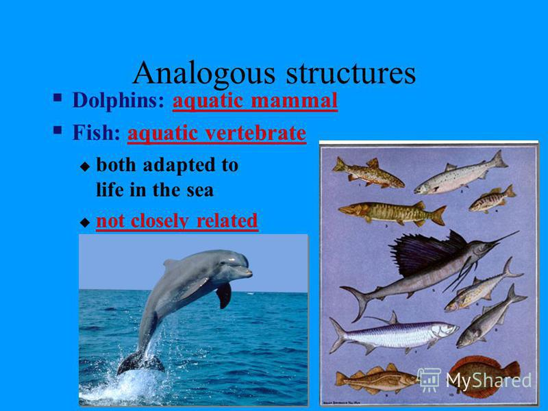 Analogous Structures Analogous structures are a contrast to homologous structures. They serve the same function between organisms but are different in internal anatomy. Such as the wings of birds and butterflies or the eyes of lobsters and fish. Thes