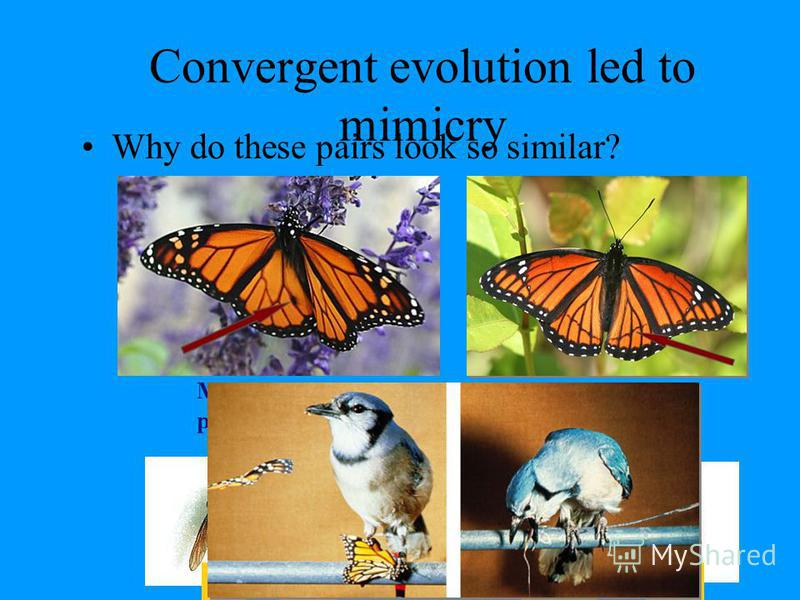 Convergent evolution 3 groups with wings –Does this mean they have a recent common ancestor? Flight evolved 3 separate times evolving similar solutions to similar problems Flight evolved 3 separate times evolving similar solutions to similar problems