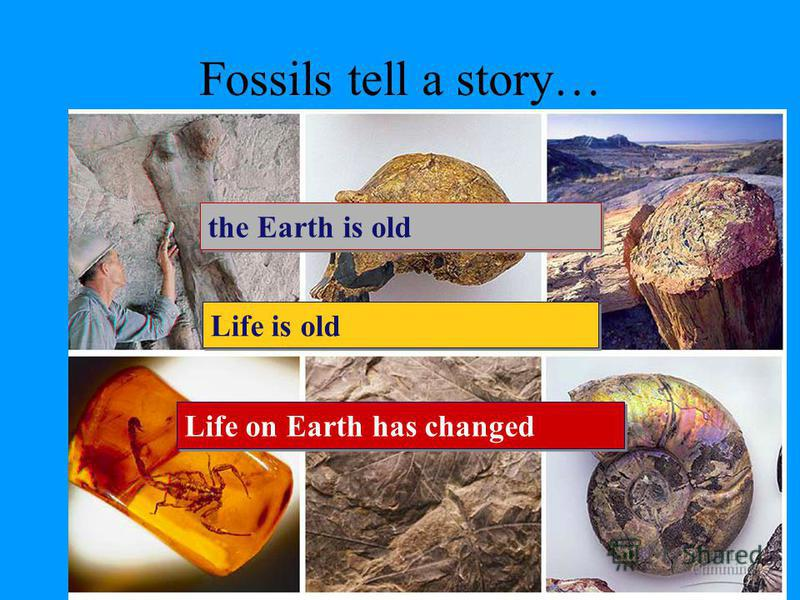 Fossil record Layers of rock contain fossils –new layers cover older ones creates a record over time –fossils show a series of organisms have lived on Earth over a long period of time