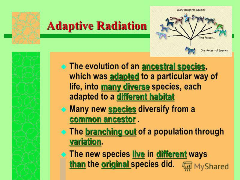 Adaptive Radiation The evolution of an a aa ancestral species, which was a aa adapted to a particular way of life, into m mm many diverse species, each adapted to a d dd different habitat Many new s ss species diversify from a common ancestor. The b