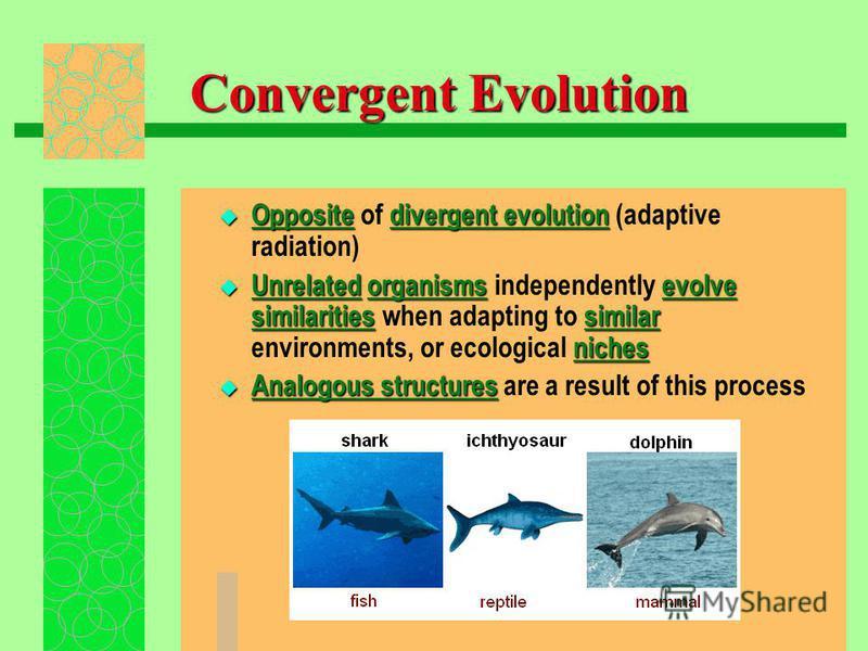 Convergent Evolution Oppositedivergent evolution Opposite of divergent evolution (adaptive radiation) Unrelatedorganismsevolve similaritiessimilar niches Unrelated organisms independently evolve similarities when adapting to similar environments, or