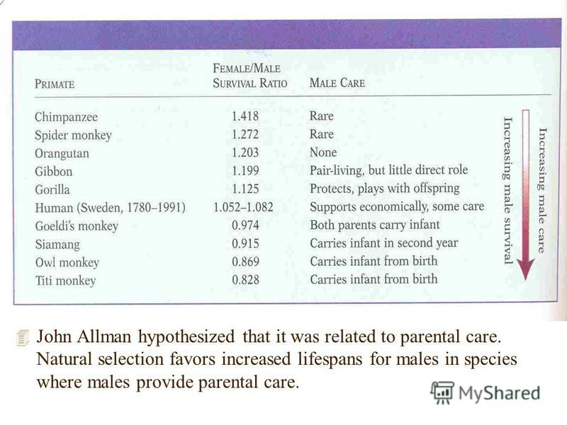 4 John Allman hypothesized that it was related to parental care. Natural selection favors increased lifespans for males in species where males provide parental care.