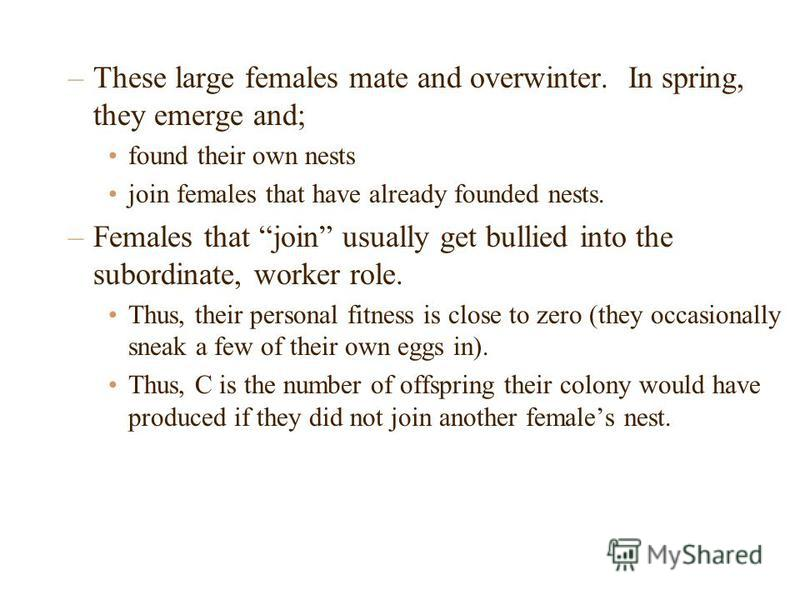 –These large females mate and overwinter. In spring, they emerge and; found their own nests join females that have already founded nests. –Females that join usually get bullied into the subordinate, worker role. Thus, their personal fitness is close