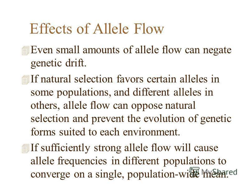 Effects of Allele Flow 4 Even small amounts of allele flow can negate genetic drift. 4 If natural selection favors certain alleles in some populations, and different alleles in others, allele flow can oppose natural selection and prevent the evolutio