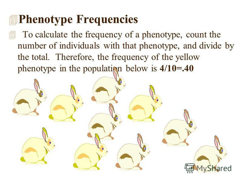4 Phenotype Frequencies 4 To calculate the frequency of a phenotype, count the number of individuals with that phenotype, and divide by the total. Therefore, the frequency of the yellow phenotype in the population below is 4/10=.40