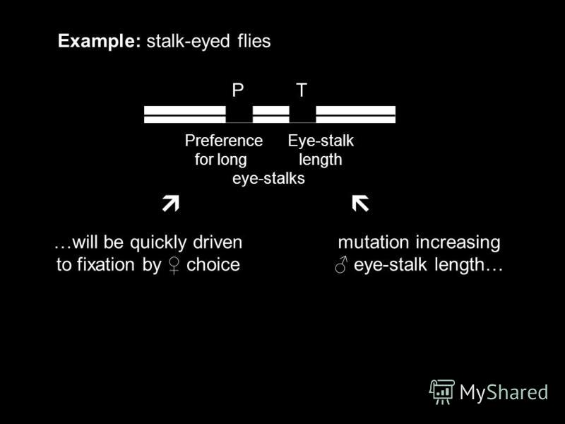 P T Example: stalk-eyed flies Preference Eye-stalk for long length eye-stalks mutation increasing eye-stalk length… …will be quickly driven to fixation by choice