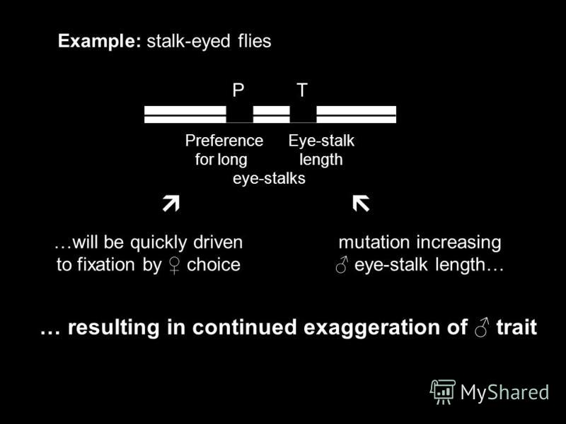 P T Example: stalk-eyed flies Preference Eye-stalk for long length eye-stalks mutation increasing eye-stalk length… …will be quickly driven to fixation by choice … resulting in continued exaggeration of trait