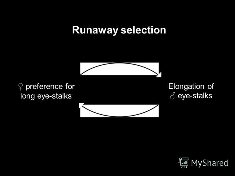 preference for long eye-stalks Elongation of eye-stalks Runaway selection