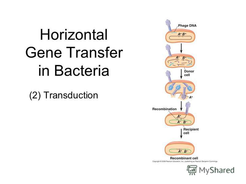 Horizontal Gene Transfer in Bacteria (2) Transduction