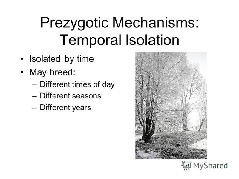Prezygotic Mechanisms: Temporal Isolation Isolated by time May breed: –Different times of day –Different seasons –Different years