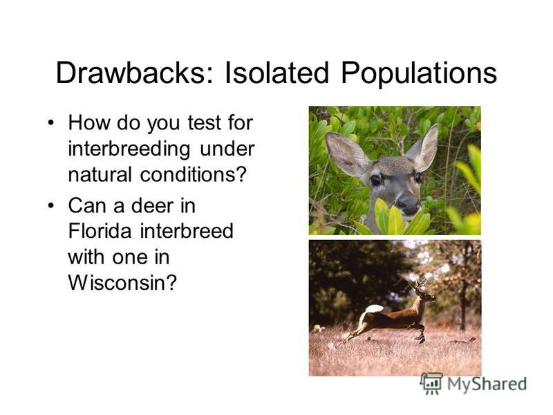 Drawbacks: Isolated Populations How do you test for interbreeding under natural conditions? Can a deer in Florida interbreed with one in Wisconsin?