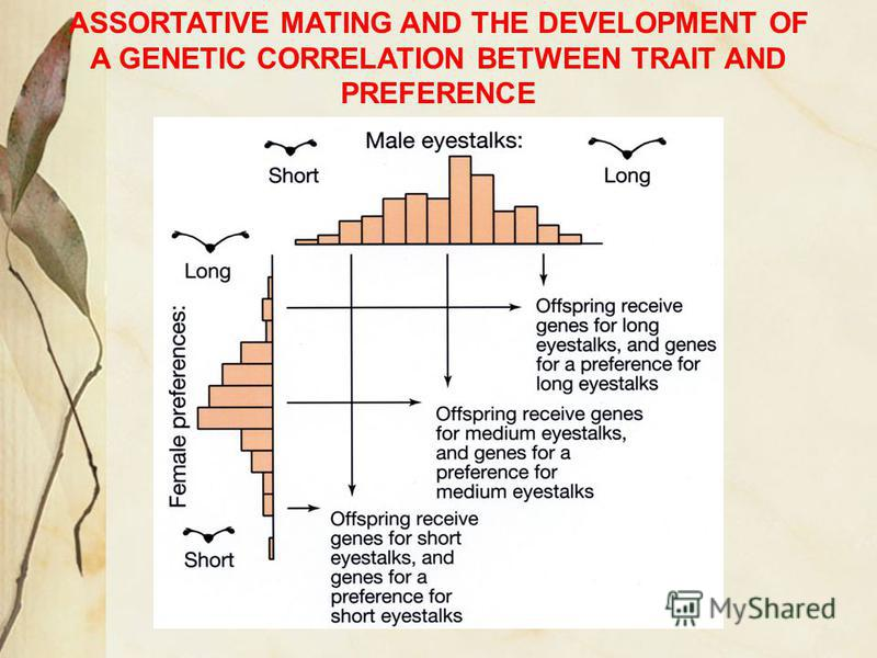 ASSORTATIVE MATING AND THE DEVELOPMENT OF A GENETIC CORRELATION BETWEEN TRAIT AND PREFERENCE