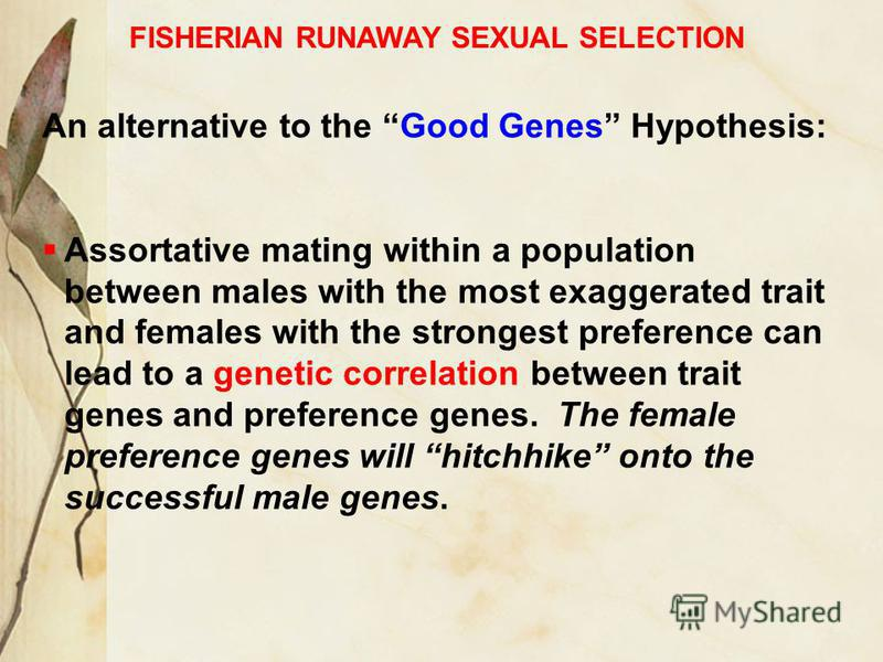 FISHERIAN RUNAWAY SEXUAL SELECTION An alternative to the Good Genes Hypothesis: Assortative mating within a population between males with the most exaggerated trait and females with the strongest preference can lead to a genetic correlation between t
