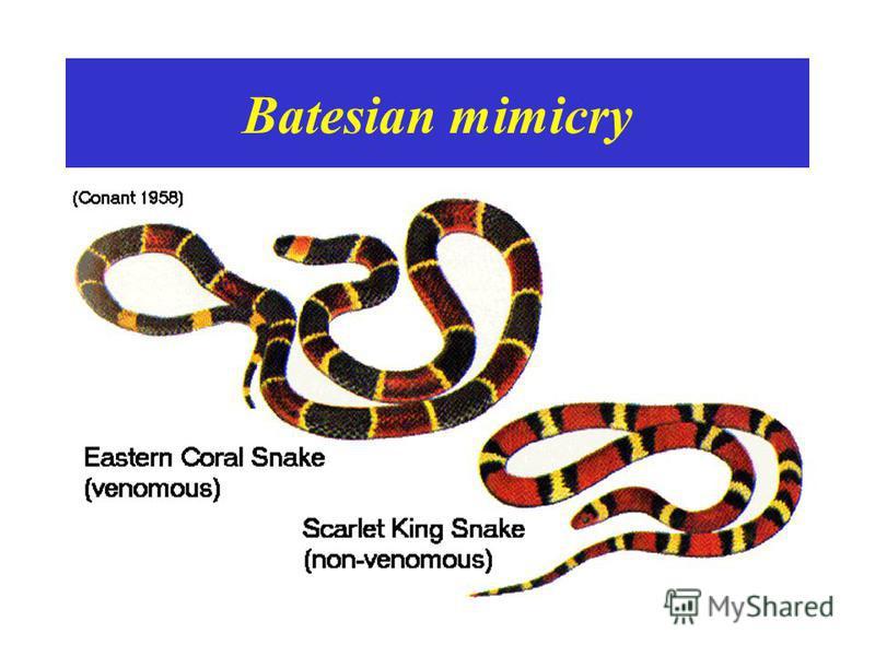 Batesian mimicry