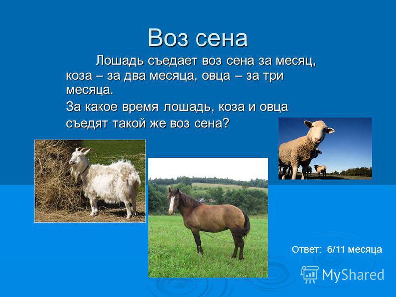 Воз сена Лошадь съедает воз сена за месяц, коза – за два месяца, овца – за три месяца. Лошадь съедает воз сена за месяц, коза – за два месяца, овца – за три месяца. За какое время лошадь, коза и овца съедят такой же воз сена? Ответ: 6/11 месяца