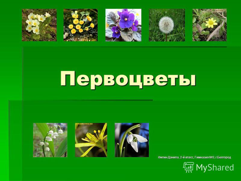 Первоцветы Филин Данила, 2-й класс, Гимназия 3, г.Белгород