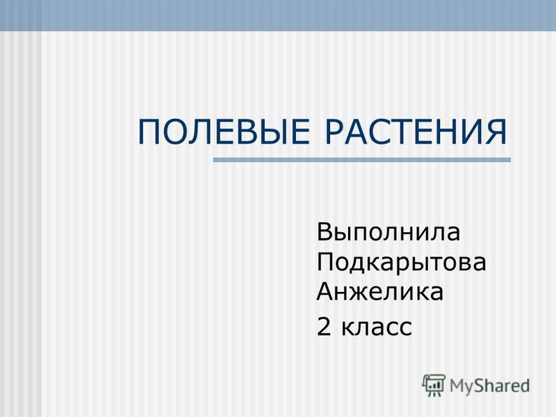 ПОЛЕВЫЕ РАСТЕНИЯ Выполнила Подкарытова Анжелика 2 класс
