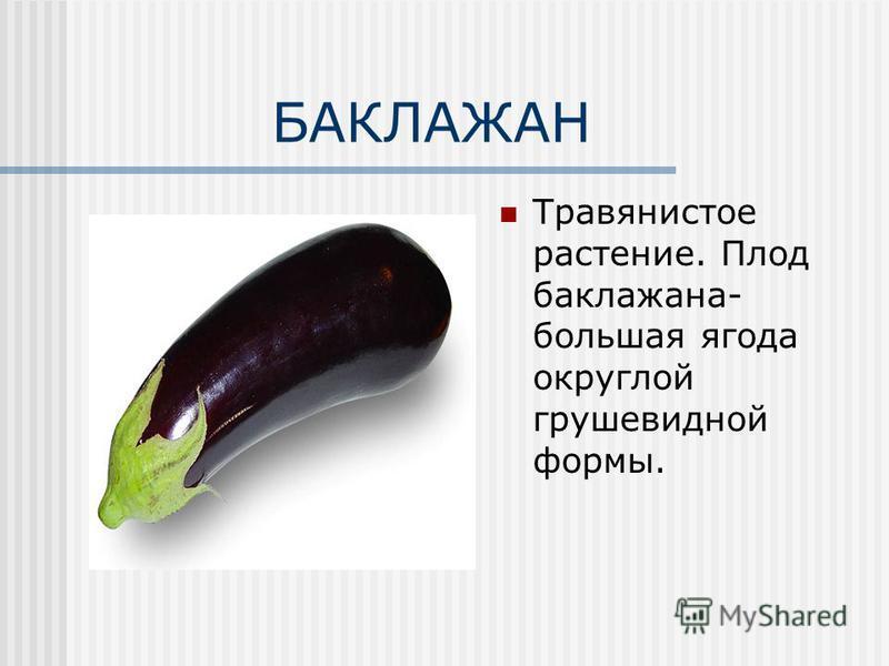 БАКЛАЖАН Травянистое растение. Плод баклажана- большая ягода округлой грушевидной формы.