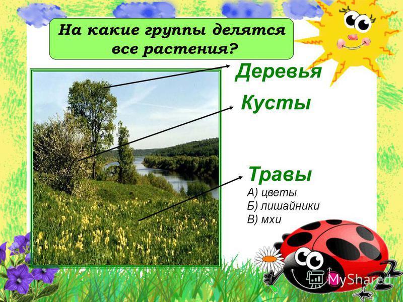 Деревья Кусты Травы А) цветы Б) лишайники В) мхи На какие группы делятся все растения?