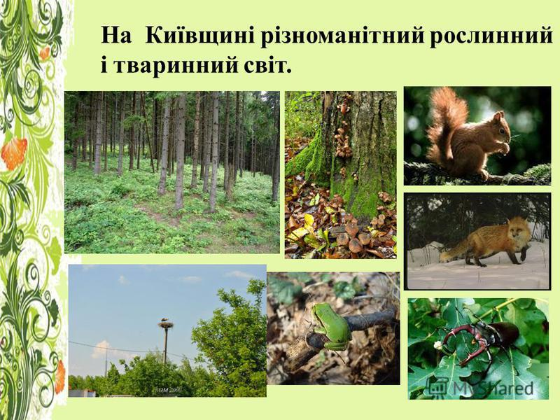 На Київщині різноманітний рослинний і тваринний світ.
