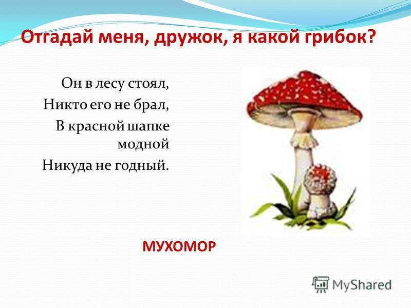 Отгадай меня, дружок, я какой грибок? Он в лесу стоял, Никто его не брал, В красной шапке модной Никуда не годный. МУХОМОР