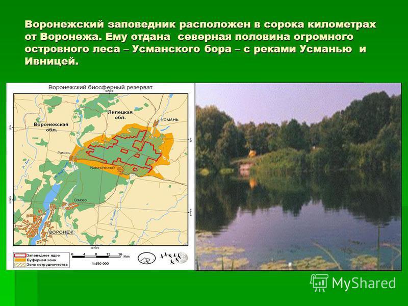 Воронежский заповедник расположен в сорока километрах от Воронежа. Ему отдана северная половина огромного островного леса – Усманского бора – с реками Усманью и Ивницей.