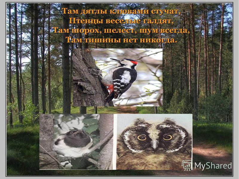 Там дятлы клювами стучат, Птенцы веселые галдят, Там шорох, шелест, шум всегда, Там тишины нет никогда.