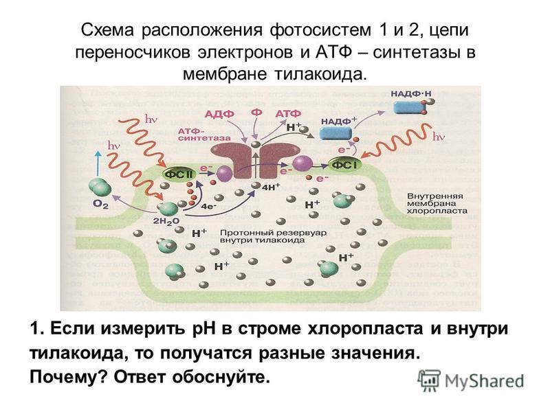 Схема расположения фотосистем