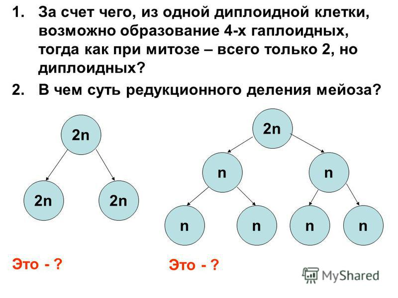 1. За счет чего, из одной диплоидной клетки, возможно образование 4-х гаплоидных, тогда как при митозе – всего только 2, но диплоидных? 2. В чем суть редукционного деления мейоза? 2n2n 2n2n2n2n Это - ? 2n2n nn nnnn