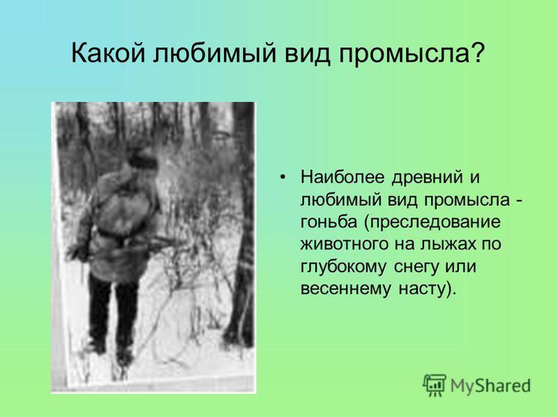 Какой любимый вид промысла? Наиболее древний и любимый вид промысла - гоньба (преследование животного на лыжах по глубокому снегу или весеннему насту).