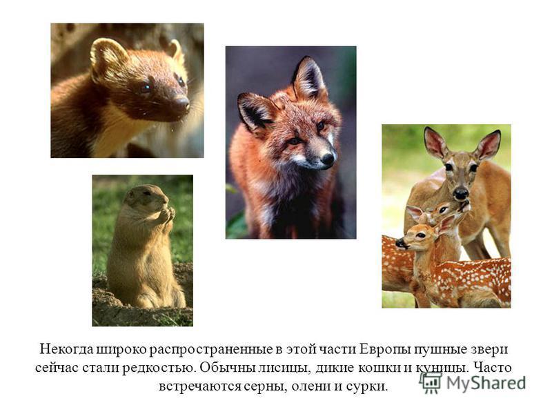 Некогда широко распространенные в этой части Европы пушные звери сейчас стали редкостью. Обычны лисицы, дикие кошки и куницы. Часто встречаются серны, олени и сурки.
