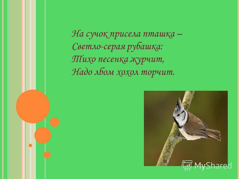 Д ЛИННОХВОСТАЯ СИНИЦА