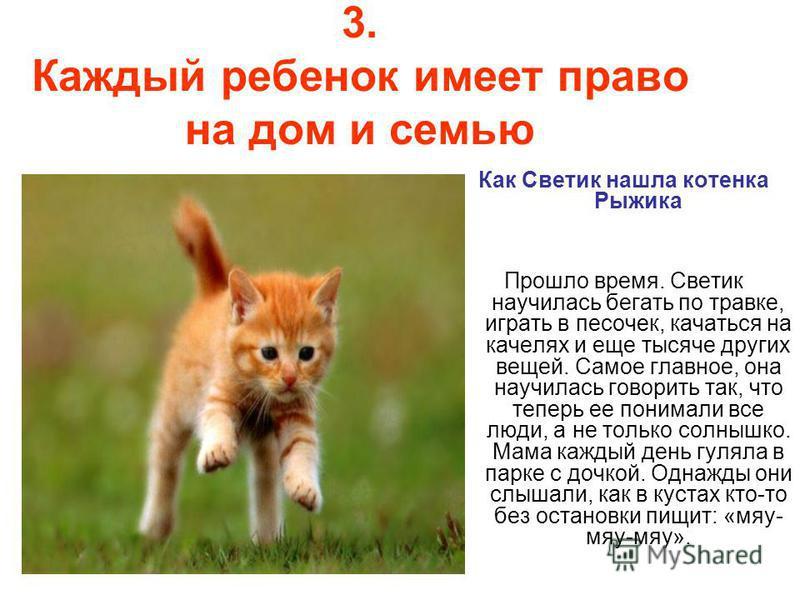 3. Каждый ребенок имеет право на дом и семью Как Светик нашла котенка Рыжика Прошло время. Светик научилась бегать по травке, играть в песочек, качаться на качелях и еще тысяче других вещей. Самое главное, она научилась говорить так, что теперь ее по