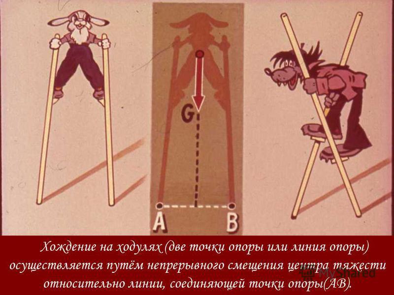 Хождение на ходулях (две точки опоры или линия опоры) осуществляется путём непрерывного смещения центра тяжести относительно линии, соединяющей точки опоры(АВ).