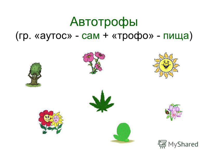 Автотрофы (гр. «аутос» - сам + «трофо» - пища)