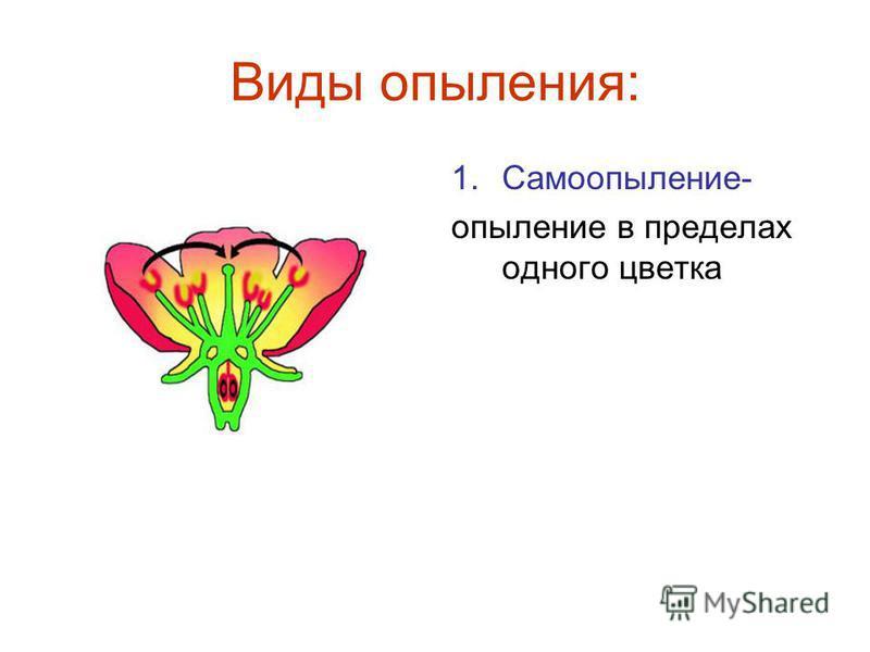 Виды опыления: 1.Самоопыление- опыление в пределах одного цветка