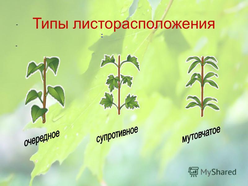 Жилкование листьев Однодольные Двудольные Параллельное Дуговое Сетчатое Перистое Пальчатое