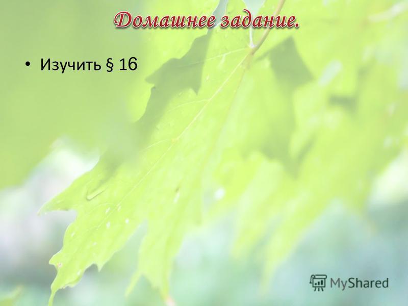 - - - Типы листорасположения