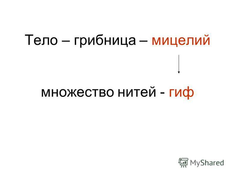 Тело – грибница – мицелий множество нитей - гиф