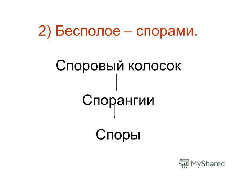 2) Бесполое – спорами. Споровый колосок Спорангии Споры