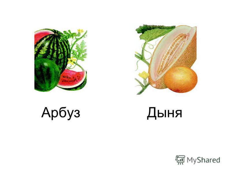 Арбуз Дыня