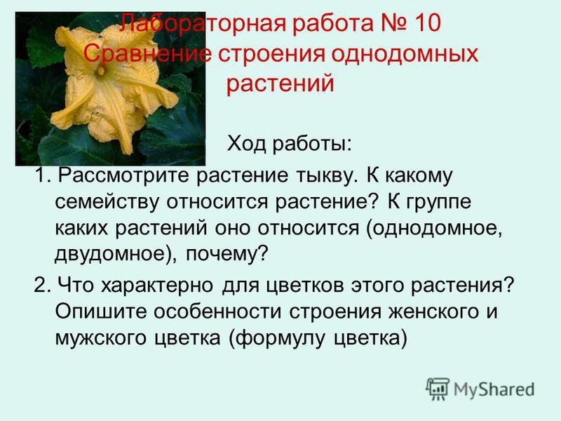 Лабораторная работа 10 Сравнение строения однодомных растений Ход работы: 1. Рассмотрите растение тыкву. К какому семейству относится растение? К группе каких растений оно относится (однодомное, двудомное), почему? 2. Что характерно для цветков этого