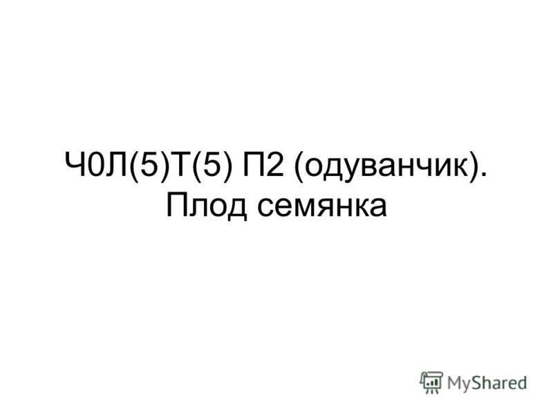 Ч0Л(5)Т(5) П2 (одуванчик). Плод семянка